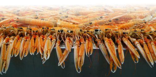 Shrimp farm with AggreBind